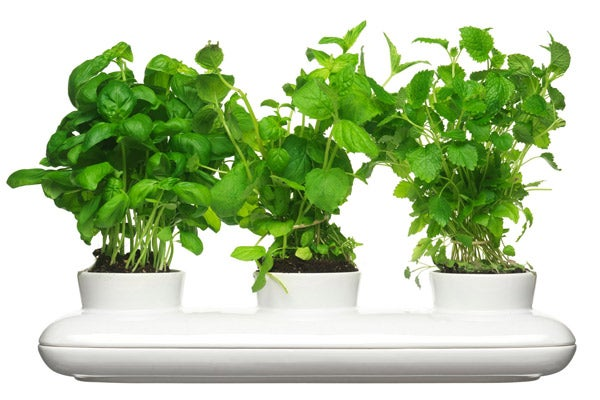 Tabletop_LOCAL_Herb-Pot-Trio_58