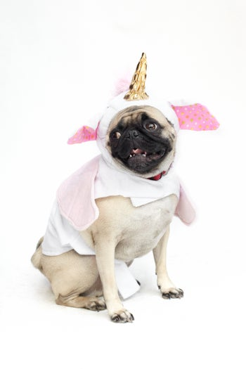 28_Sgt.Pepper_Unicorn_Pug3