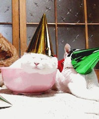 partycats