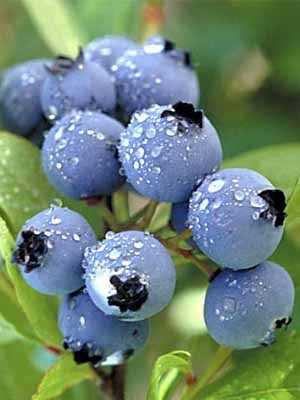 blueberries-skin-care