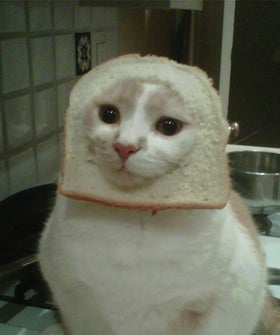 cat_breading