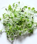 microgreens-opener
